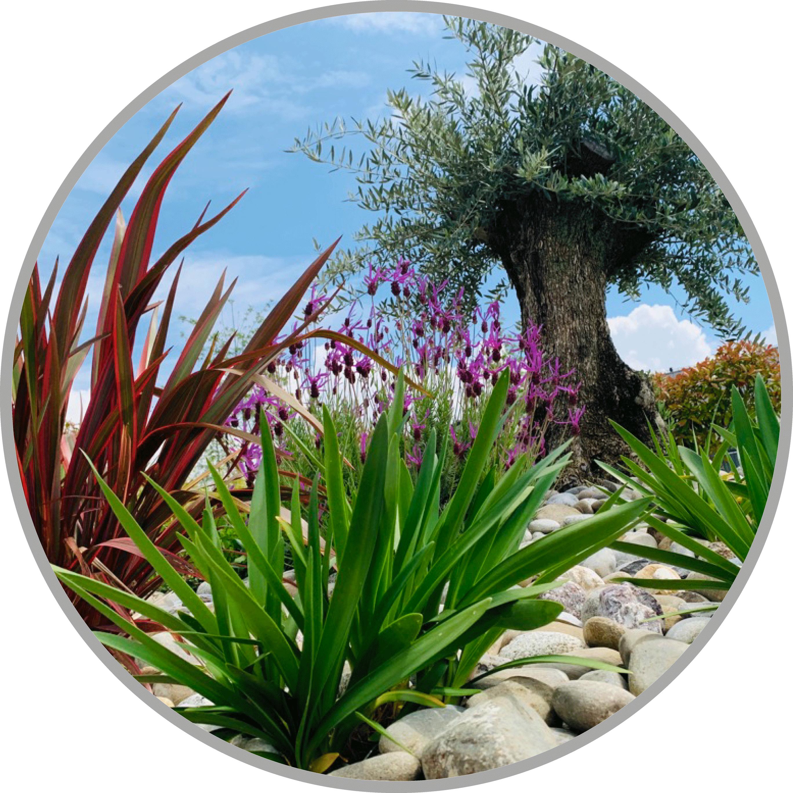 aménagements_extérieurs_jardin_paysagiste